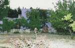 Garden Kamara House in Kato Drys - An agrotourism holiday house in Cyprus - The garden, with trees.