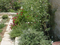 The Jasmine in the garden of Yasmini villa in Tochni in Cyprus - Part of the Agrotourism project - a carefully restored self catering villa for your holiday rentals in Cyprus